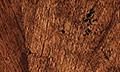 Stanley Furniture / Website - Details of Distinction